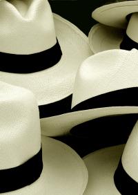 Panama hats montage
